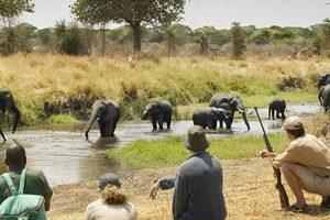 Tour Operators in Tanzania