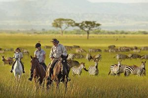 top 15 National Parks in Tanzania